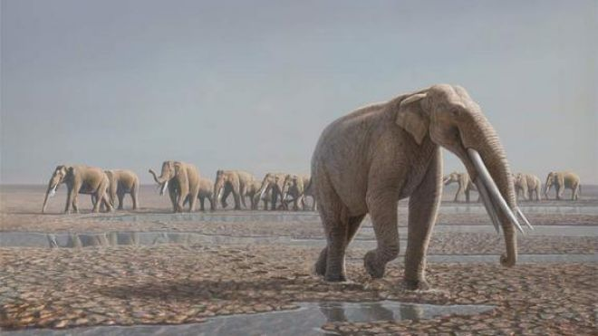 Elephant-herd-reconstruction