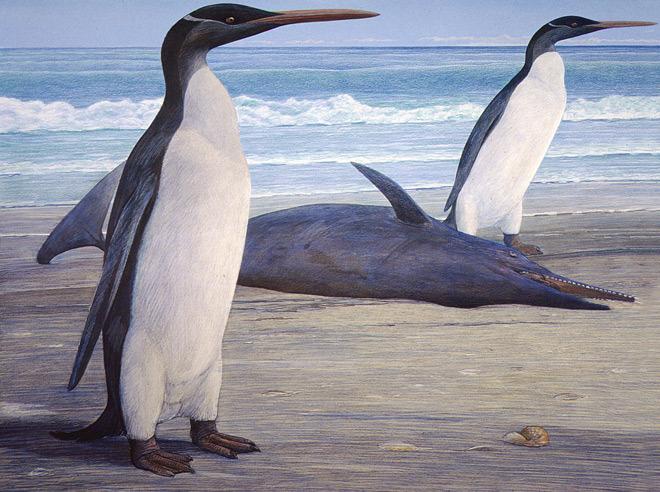 Kairuku-penguin-chris-gaskin-geology-museum-university-otago