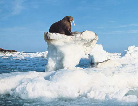 Iceberg220907_468x359