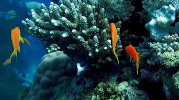 Ocean-fish-via-afp